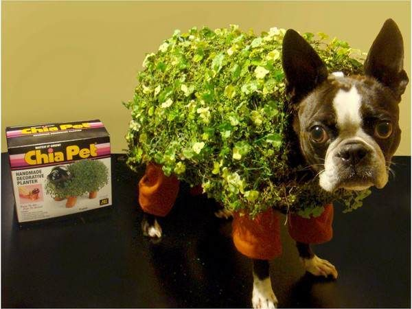 How To Win A Dog Halloween Costume Contest Pet Halloween