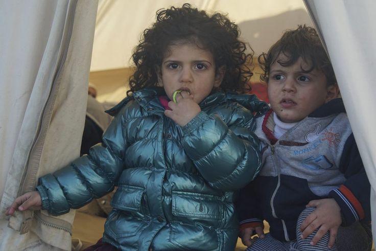 essay writing refugees