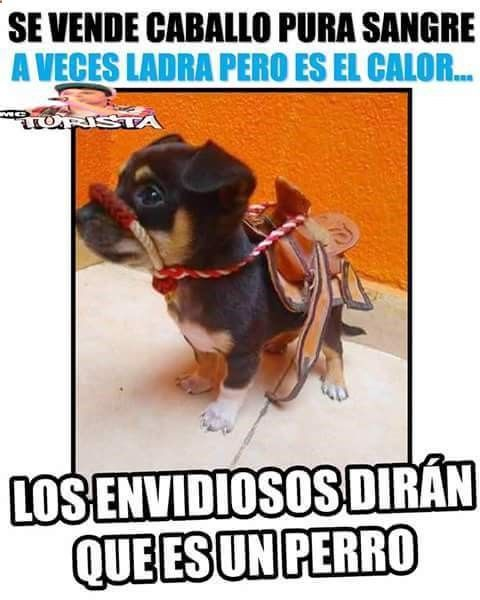 #memes #chistes #humor ➟➟ http://www.diverint.com/user-profile