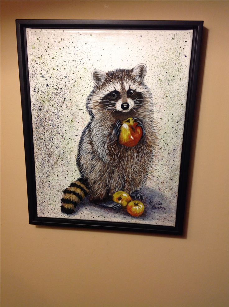 """This is called """"Apple Jack"""" and he is a cheeky  Raccoon."""