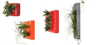 Flower Box - Plantas que desafiam a gravidade I
