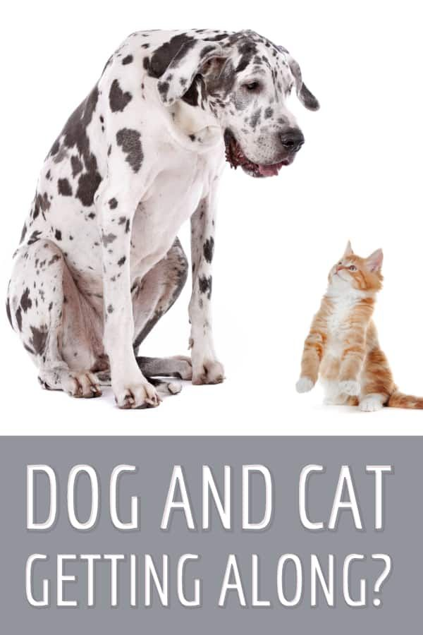 Are You Worried About Your Dog And Cat Getting Along This Can Be