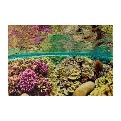 Hard Coral Carpets | Kingman Reef Pacific Ocean Acrylic Print - ocean side nature waves freedom design