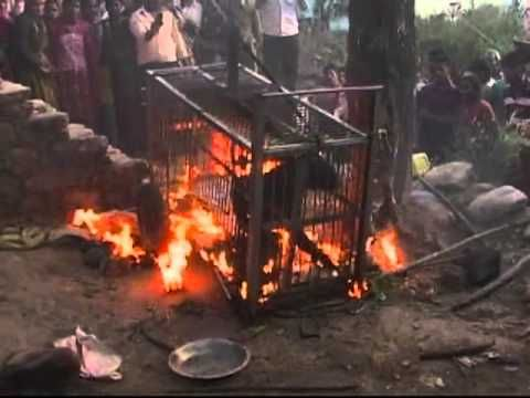 https://i.pinimg.com/736x/52/80/7d/52807d68ed9f7a61ef8bcc9add75df4a--stop-animal-cruelty-about-animals.jpg Being Burned Alive