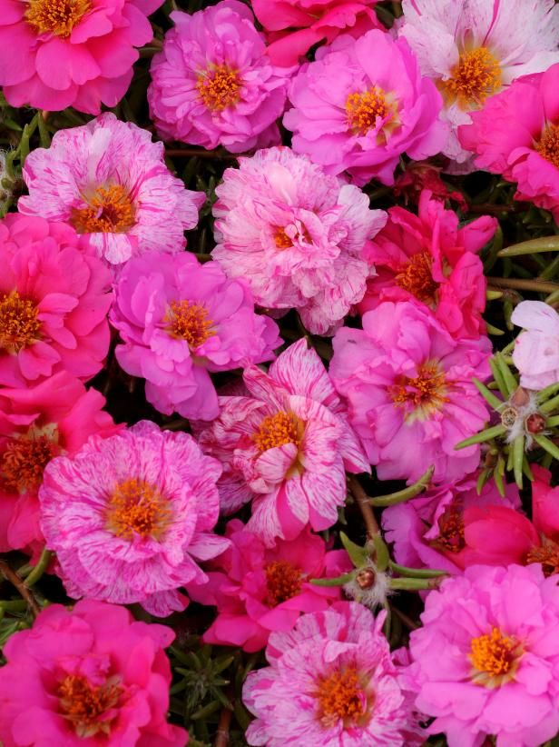 Drought Tolerant Plants Beautiful Flowers To Live By Fall