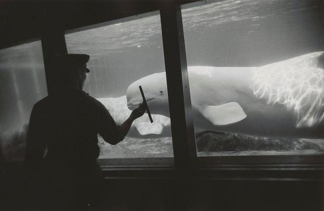 7. Нью-Йоркский аквариум, Кони-Айленд, Нью-Йорк, 1967.