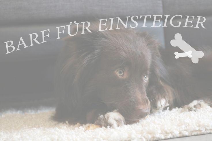 BARF für Einsteiger [Teil 3] Welche Nährstoffe braucht ein Hund?