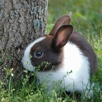 I have always wanted a Dutch rabbit. Maybe someday . . .
