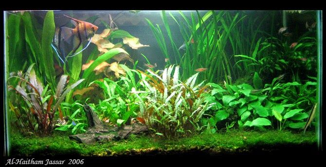 Jassar's Blog: How to make a small indoor pond on a budget