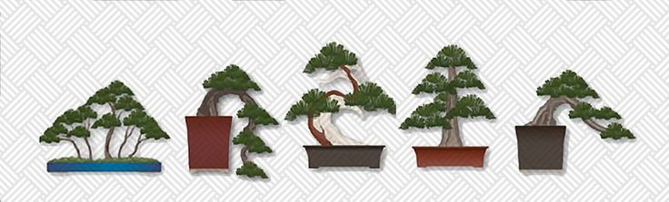 on how to take care of your bonsai tree. It focuses on beginner bonsai ...