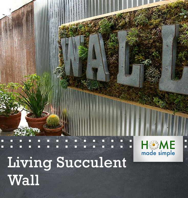 A living wall of succulents creates an art piece that for Indoor succulent wall