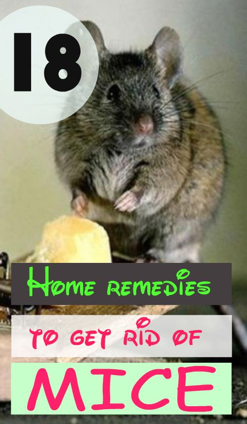 18 Home Remedies To Get Rid Of Mice Home Remedies