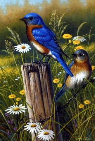Cynthie Fisher Bluebird Picture Eastern Beauties
