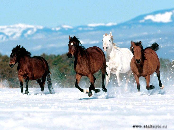 Дикие Мустанги лошади