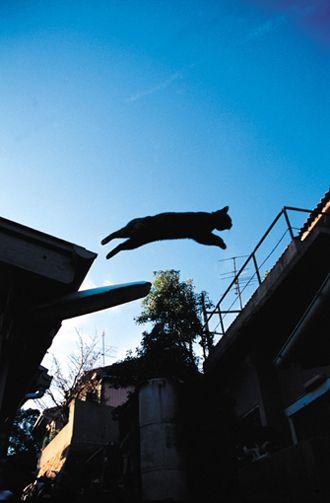 まさに空飛ぶ猫★ジャンプ!!猫(Jumping cat・Flying cat)■鞆の浦野良猫写真 : 【BlueNote】 鞆の浦+野良猫+風景写真と絵手紙/TOMONOURA■広島福山