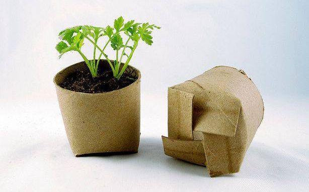 papier toilette recyclé pour faire des semis