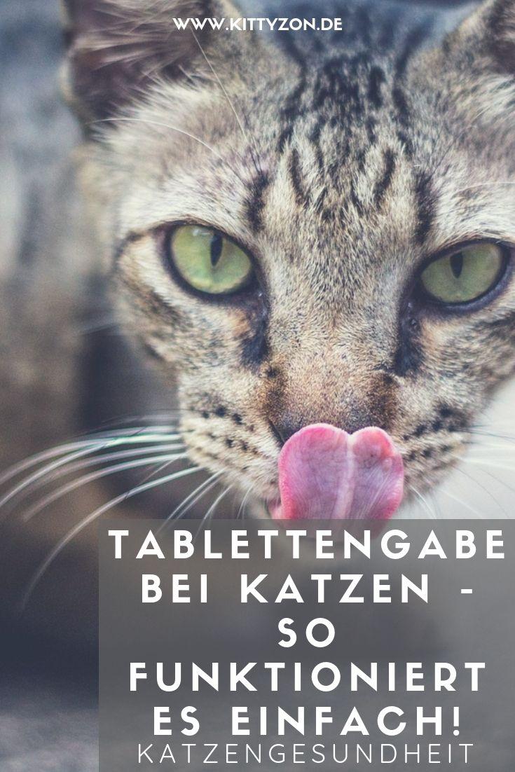 So Gibst Du Deiner Katze Stressfrei Eine Tablette In 2020 Mit