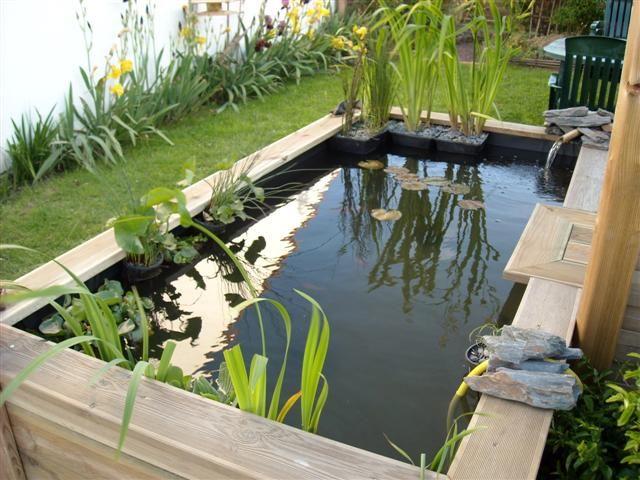 Le forum de Passion Bassin - bassin de jardin, baignade naturelle, technique, plantes aquatiques, poissons et carpe koï