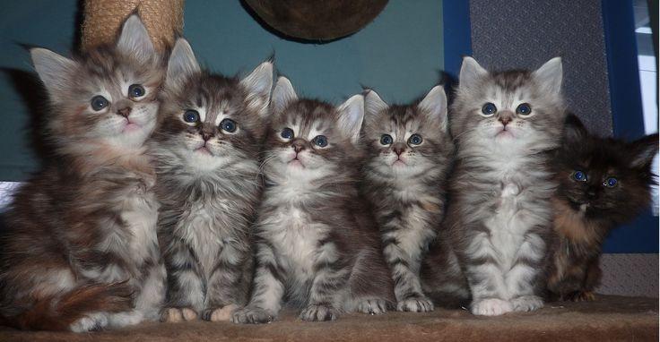 Bilder Av Søte Kattunger | se s mange ste kattunger det er skulle nske alle var mine