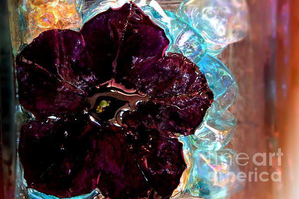Black petunia-abstract