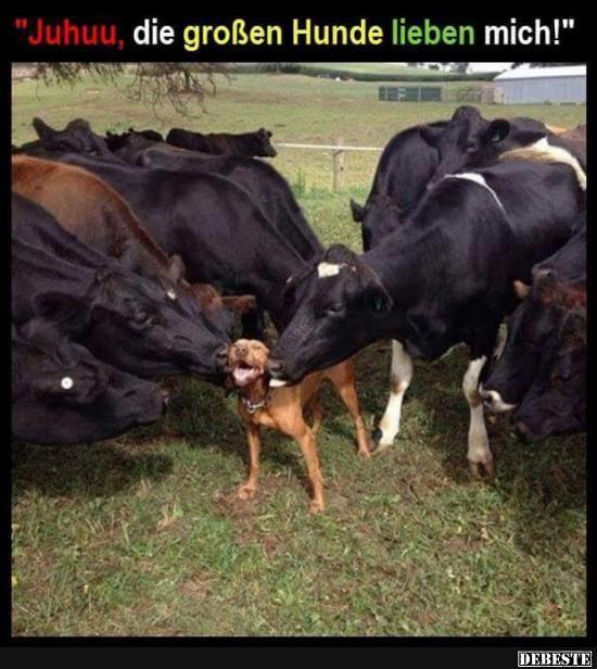 Besten Bilder, Videos und Sprüche und es kommen täglich neue lustige Facebook Bilder auf DEBESTE.DE. Hier werden täglich Witze und Sprüche gepostet! – Elisabeth Rosin