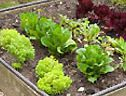 BBC – Gardening – Gardening Guides