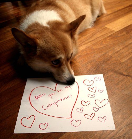 17 Best Images About Valentine's Day Pets On Pinterest