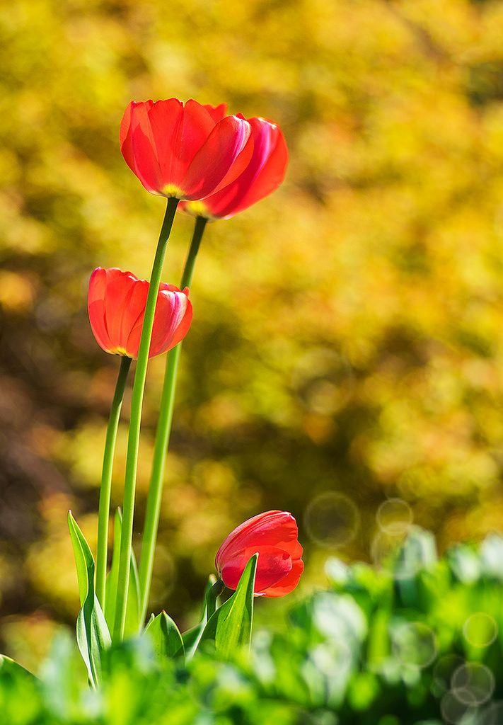 faire livrer des fleurs 34 #fleurs #bouquet