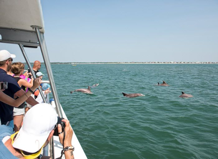 Dolphin Tours in Myrtle Beach, South Carolina!  Surprise your family and don't forget your camera!   http://www.visitmyrtlebeach.com/things-to-do/watersports/dolphin-tours/