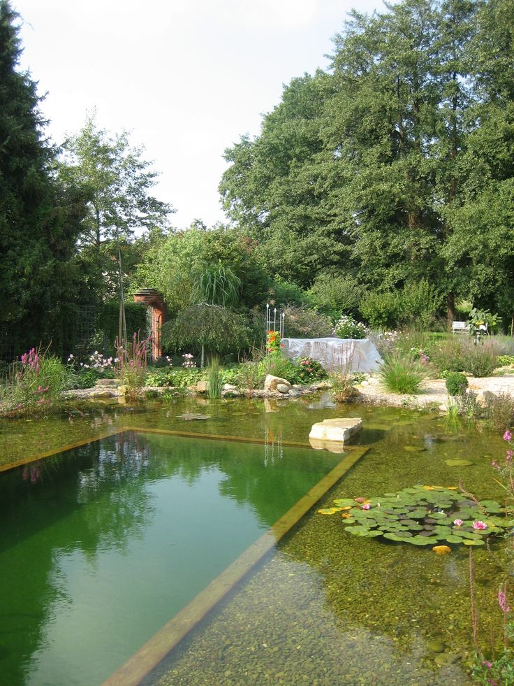 329 best images about natural pools and ponds on pinterest for Natural pond plants