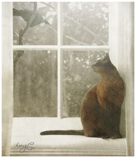 'Tiger & Tui' - my cheeky burmese cat sitting on the bedroom windowsill ! - Lucy G Photography