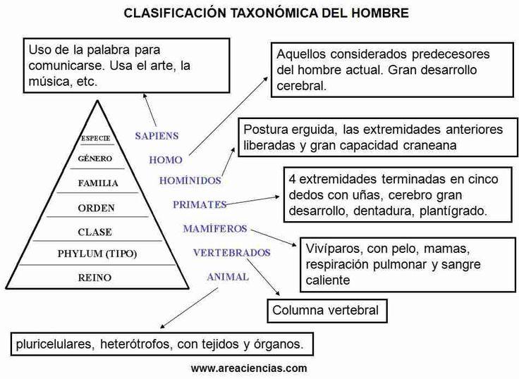 clasificacion-taxonomica-humanos.jpg (949×694)