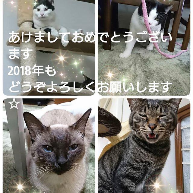 #猫#ねこ#ネコ#猫好きと繋がりたい#猫部#猫倶楽部#猫くらぶ#猫クラブ#愛猫#家族#仲良し#ねこすたぐらむ#にゃんすたぐらむ#catstagram#cat#猫LOVE#にゃんサプリ#猫は人を救う#ハチワレ#キジトラ#シャム#にゃんこ部屋#愛猫と私#お隣の#天使の使い