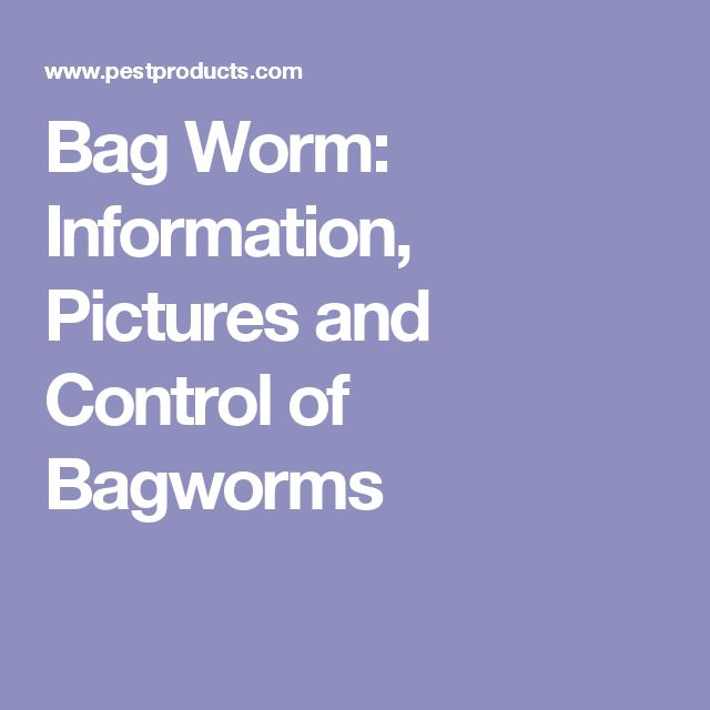 Bag Worm: Information, Pictures and Control of Bagworms