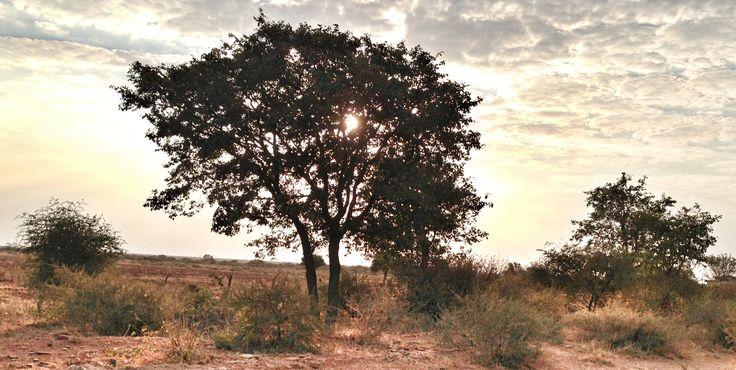 Palapye, Botswana.
