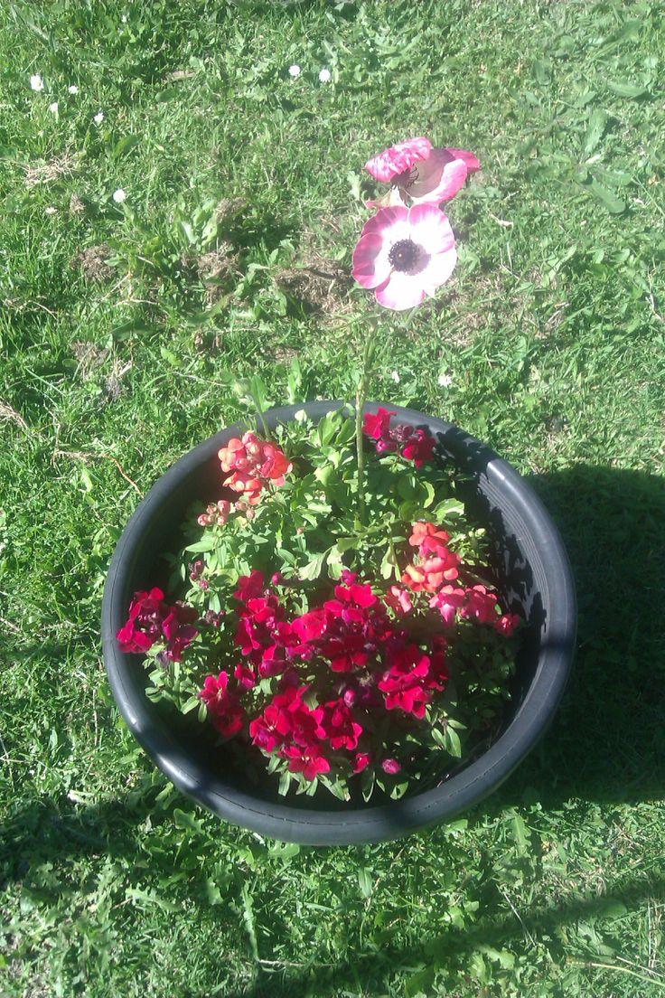 colour pot