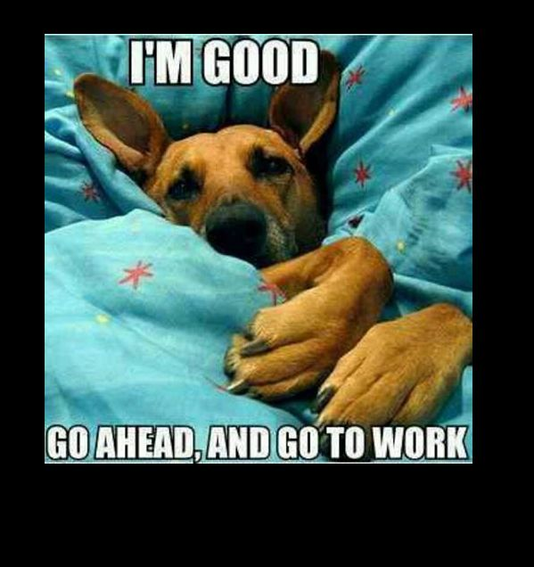 Good Morning Meme Dog : Dogs are so lucky on monday mornings pet memes