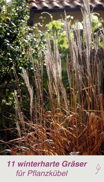 Die 11 Schonsten Graser Fur Pflanzkubel Garten Pinterest