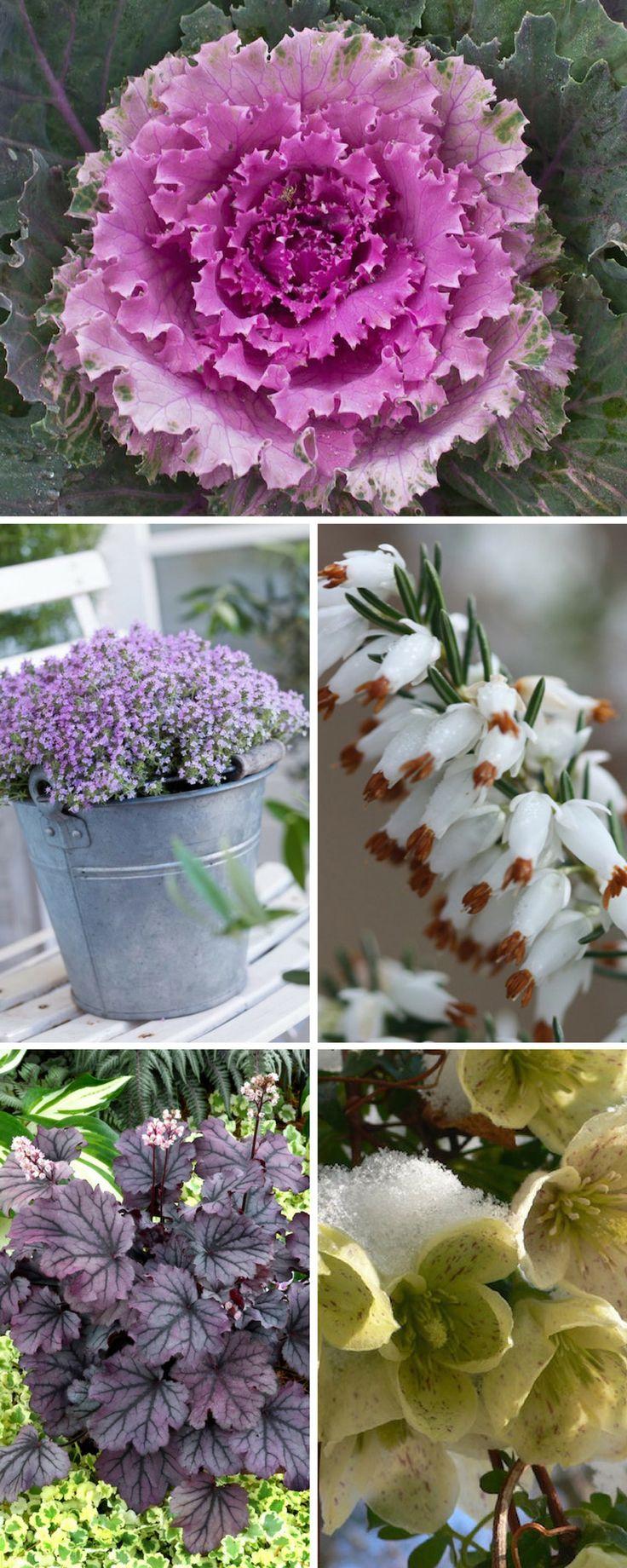 die 5151 besten bilder zu winter plants auf pinterest | sträucher, Gartengerate ideen