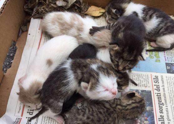 Teneri cuccioli Notizie: Noale: otto gattini appena nati gettati tra i rifi...