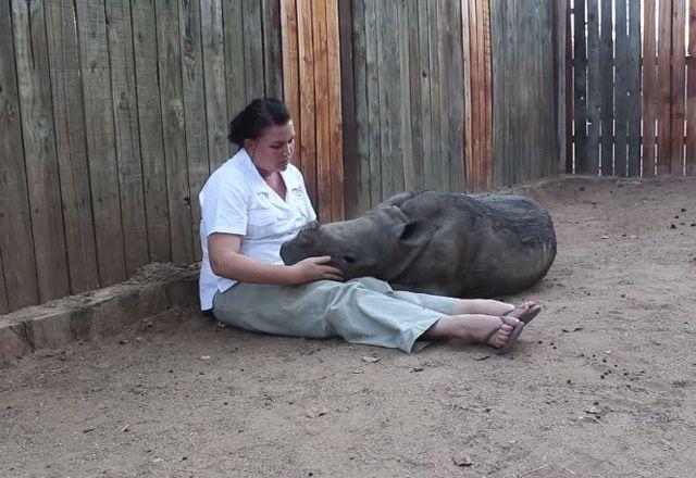 Depuis la mort de sa maman, un bébé rhinocéros ne veut plus dormir seul | Glamour