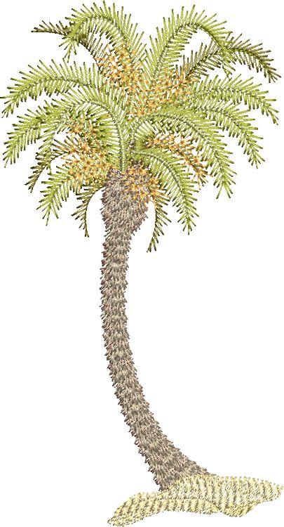 Morocco Palm B