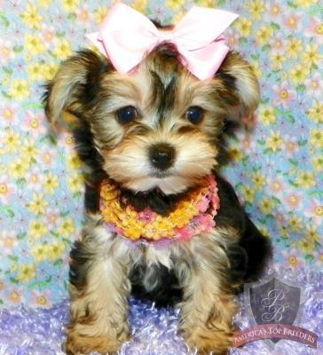 adorable: Girls Holidays, Beautiful Animal, Animal Photo, Perfect Puppys, Pink Bows, Girly Girl, Cute Puppys, Popular Pin, Adorable Animal