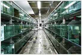 Imagini pentru aquarium fish farming