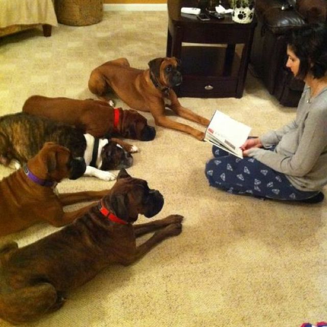 Bluegrass Boxer Rescue - the wonderful organization that helped me find a fantastic home for Scouty! Love them!