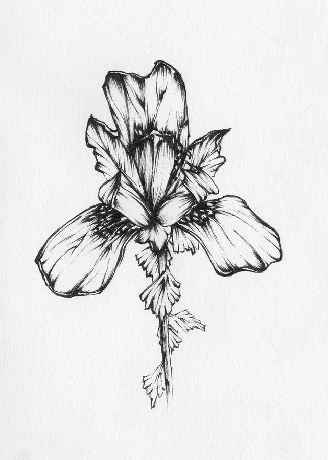 Iris Drawing - Iris Fine Art Print