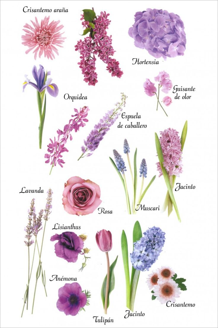 Flores moradas y azules