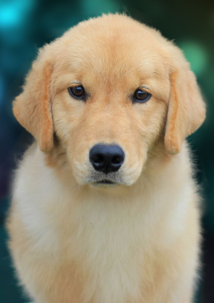 Pet Vocabulary: Translating Spanish to English Words ... pets, descriptive words and accessories ... great site ... gathers the vocabulario onto one page ...