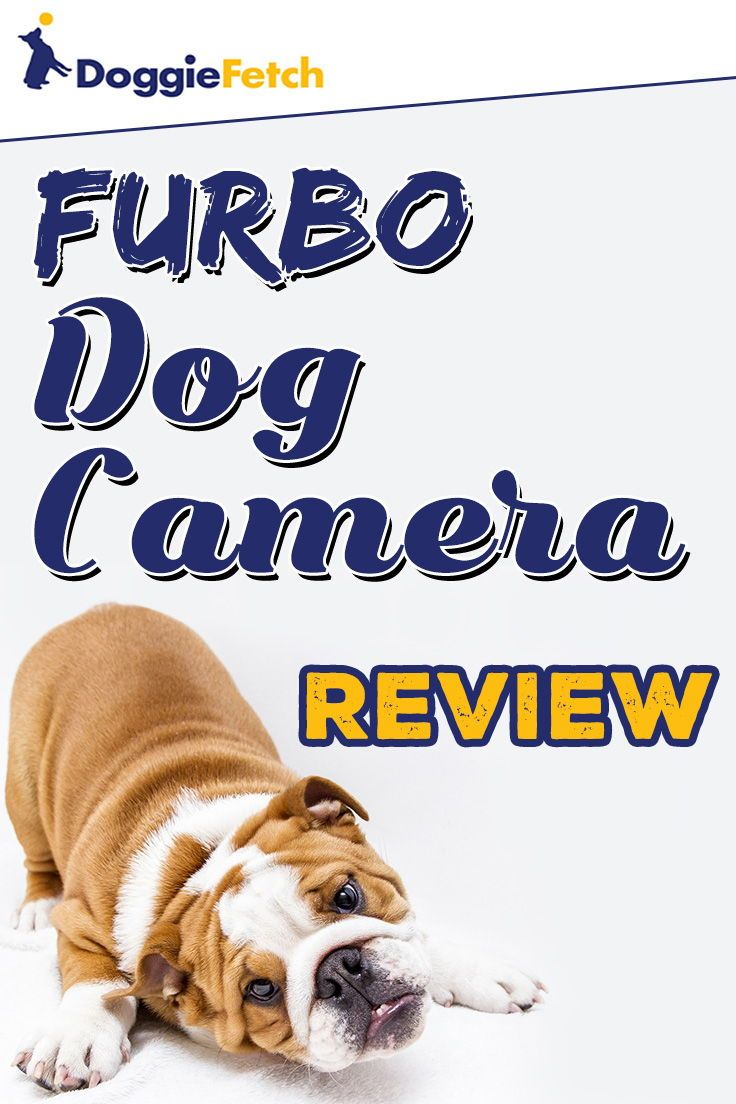 Furbo Dog Camera Review Doggiefetch Dogs Dog Owners Good Buddy