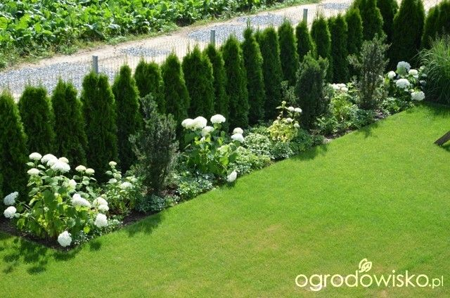 Ogród tworzę nowoczesny czyli wewnętrzna walka jak nie zostać kokoszką :) - strona 1002 - Forum ogrodnicze - Ogrodowisko